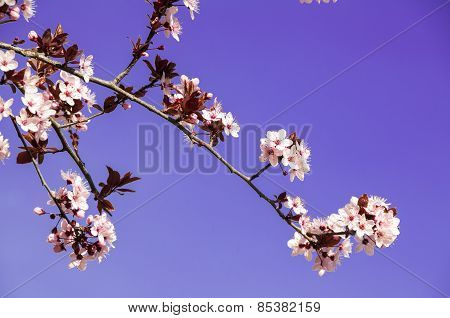 White flowers on blue sky