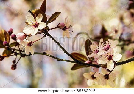 Branch of white hazel flowers on floral background