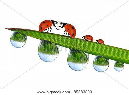 Loving ladybugs sitting on the dewy grass
