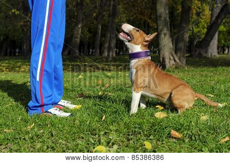 Dog training process