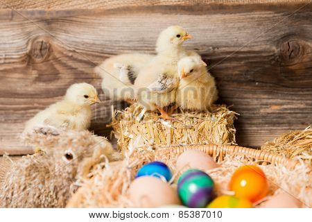 Young Easter Chicks In The Nest