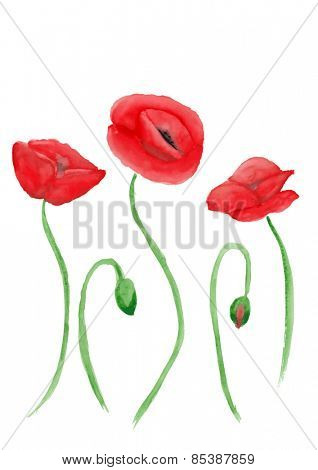 Vector illustration of poppies painted in watercolor
