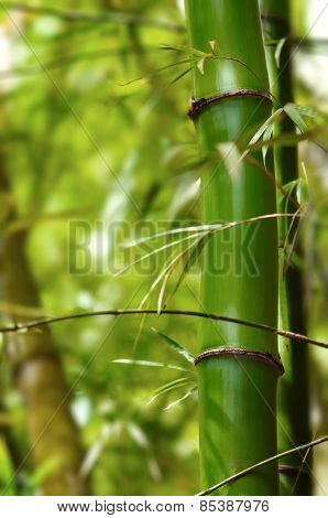 Section of green bamboo tree in the forest close up