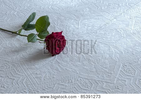 rose on the bed waiting for love