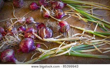 Organic Shallots On Wooden Tray