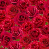 stock photo of nostalgic  - Plenty Red natural roses seamless background - JPG
