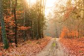 picture of fall day  - Fall landscape - JPG