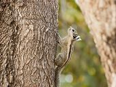 stock photo of chipmunks  - Chipmunk that was climbing a tree in the garden - JPG