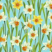 picture of jonquils  - Yellow white jonquil daffodil narcissus seamless pattern - JPG