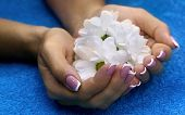 picture of french manicure  - Classic french manicure and white flowers on the blue towel - JPG