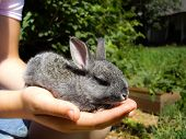 pic of cony  - little rabbit sitting on the arm of a boy on a sunny day - JPG