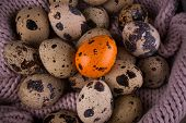 foto of quail egg  - Spotted Quail eggs with one orange egg on knitted pink background - JPG