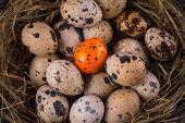 pic of quail egg  - quail eggs in a nest close - JPG