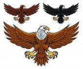image of eagle  - Vector illustration of stylized three flying eagles - JPG