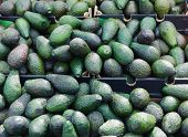 stock photo of avocado  - A large selection of avocados in boxes at a vegetale market - JPG