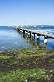 foto of green algae  - Old wooden pier Geelong Australia. Sunny summer afternoon. Blue sky and water. Green algae in foreground.