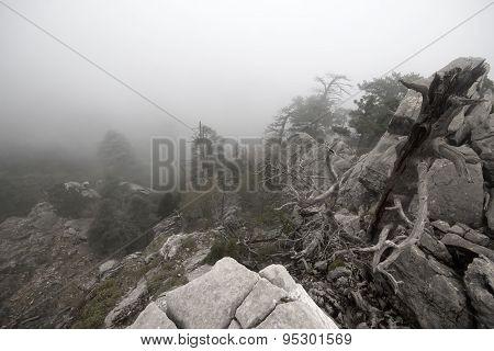Top Of Mountain In Fog