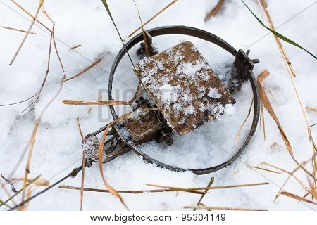 Leghold Trap On The Snow
