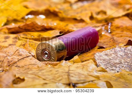 Shotgun Cartridge On Fallen Leaves