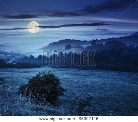 Cold Fog At Night In Mountains