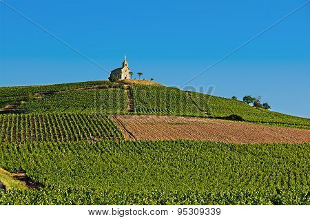 Hill Of Fleurie Village, Beaujolais, France