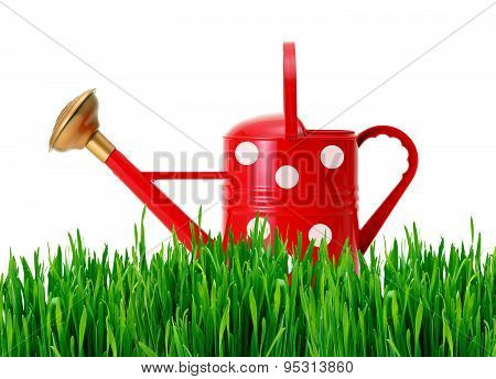 Red Polka Dot Watering Can On Green Grass Isolated On White