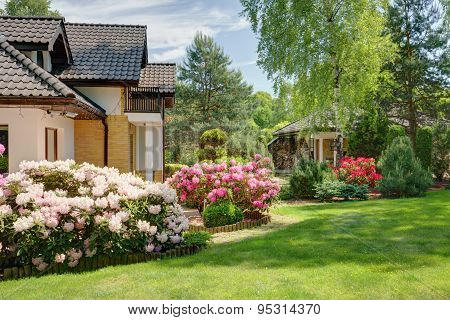 Beauty Spring-flowering Shrubs