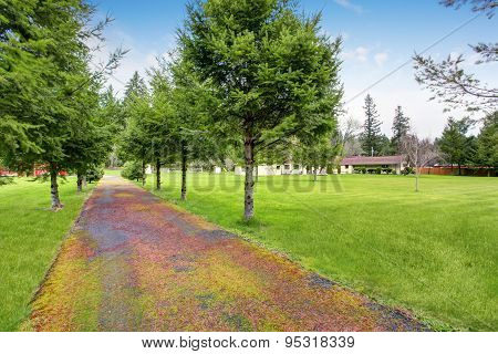 Lovely Walkway Lined With Trees And Grass.