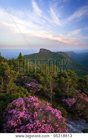 Rhododendron Spring Bloom in Linville Gorge 2