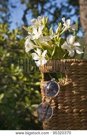 Flower background, Beautiful white flowers with basket on sunshine, spring bloom, retro background,