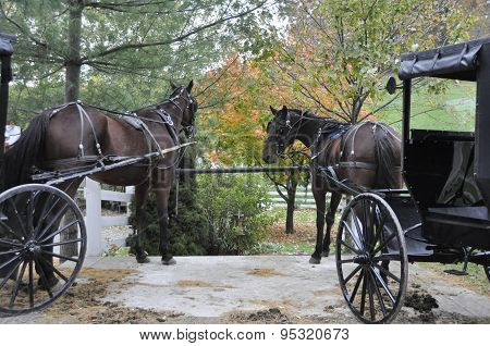 Amish Horses and Carriages