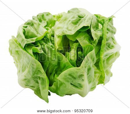 Fresh salad romaine lettuce
