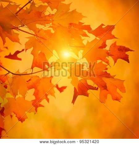 Autumn Maple Branch With Bright Vibrant Leaves On Blurred Fall Foliage Background