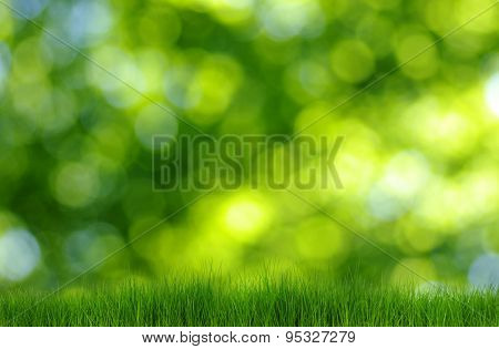grass on green bokeh background