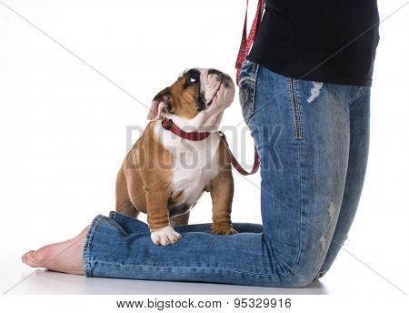 woman's legs with puppy at her feet - bulldog