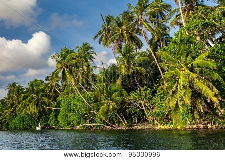 Tropical river with palm trees in Sri Lanka