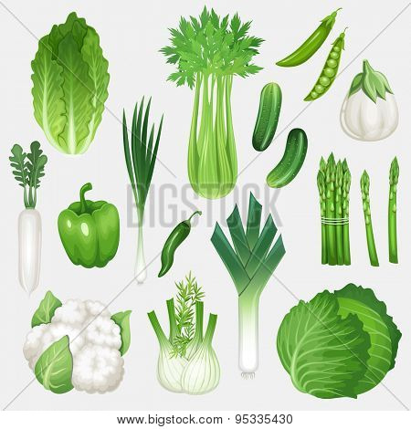 Set of fresh green vegetables. Healthy food vector illustration.