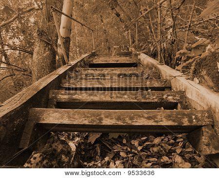 Escada de sépia