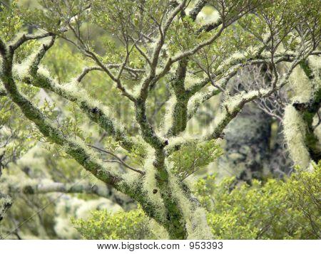 Lichen Covered Branch