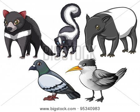 Flashcard of animals and birds with gray colour theme