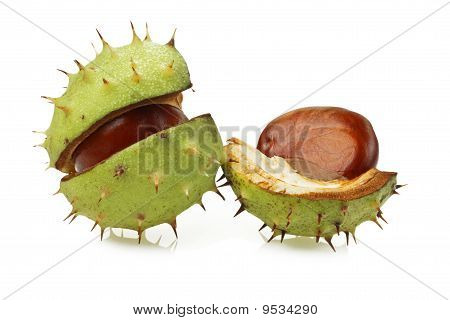 Horse Chestnut (aesculus Hippocastanum) In Natural Shell