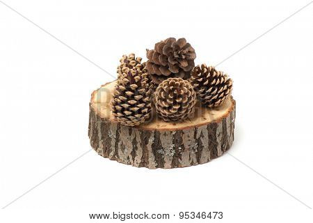 cedar cones on wood slice, isolated on white