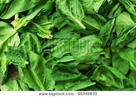 Fresh spinach leaves, closeup