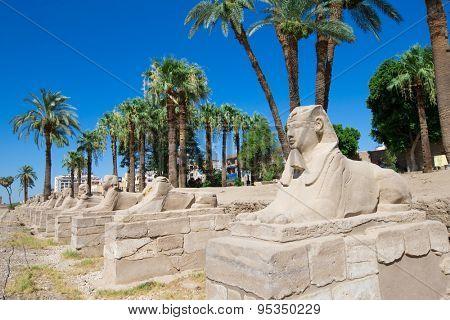 Africa, Egypt, Luxor, Amun Temple of Luxor.