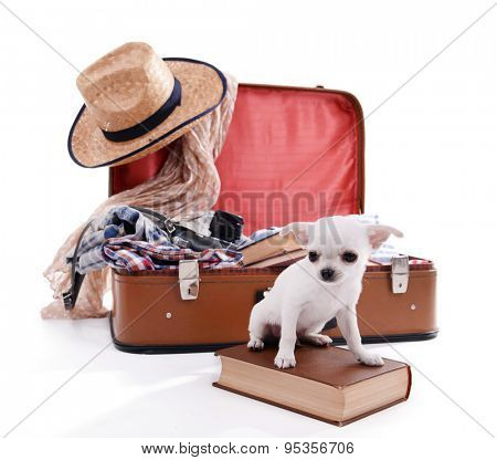Adorable chihuahua dog and suitcase with clothing isolated on white