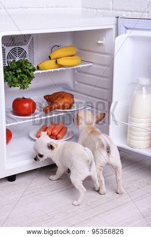 Adorable chihuahua dogs near open fridge in kitchen