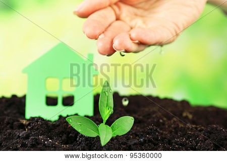 Hand watering green seedlings in soil on bright background