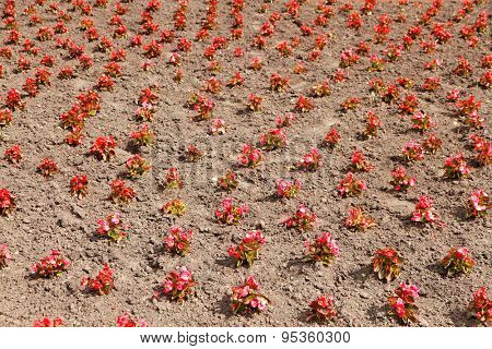 Small flowers over soil background