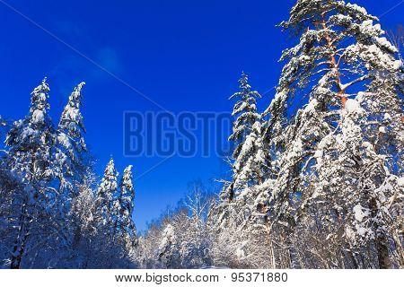Forever Winter!