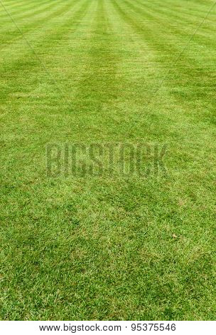 Neat manicured green turf, lawn or grass background with mowing lines and texture receding into the distance, vertical orientation